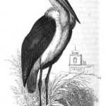 Google Libri: gli  uccelli