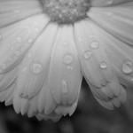Convertire una foto in bianco e nero col metodo colore Lab