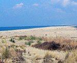 Concorso logo per l'area marina protetta 'Secche della Meloria'