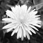 Convertire una foto in bianco e nero col metodo 'Calcoli'