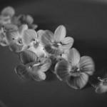Convertire una foto in bianco e nero col metodo Russel Brown